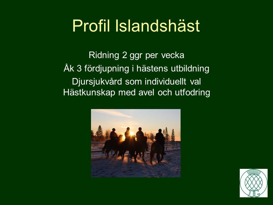Profil Islandshäst Ridning 2 ggr per vecka