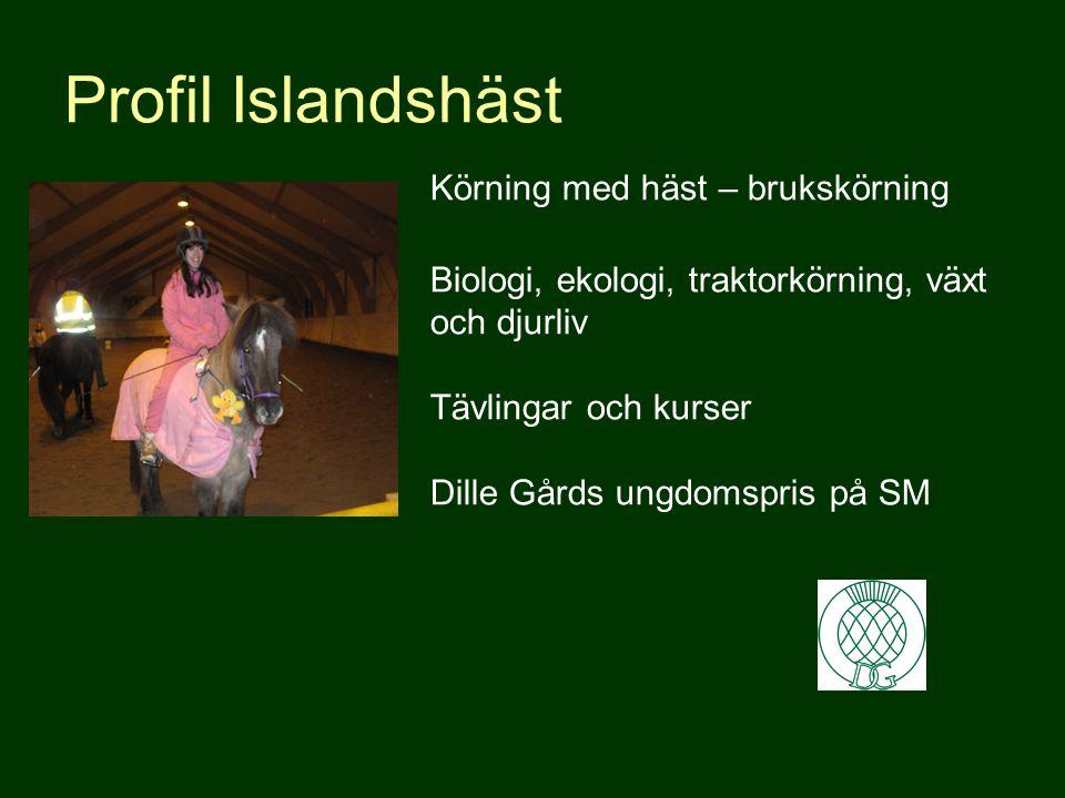 Profil Islandshäst. Körning med häst – brukskörning