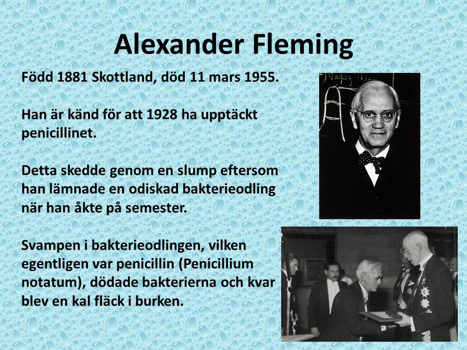 Alexander Fleming Född 1881 Skottland, död 11 mars 1955.