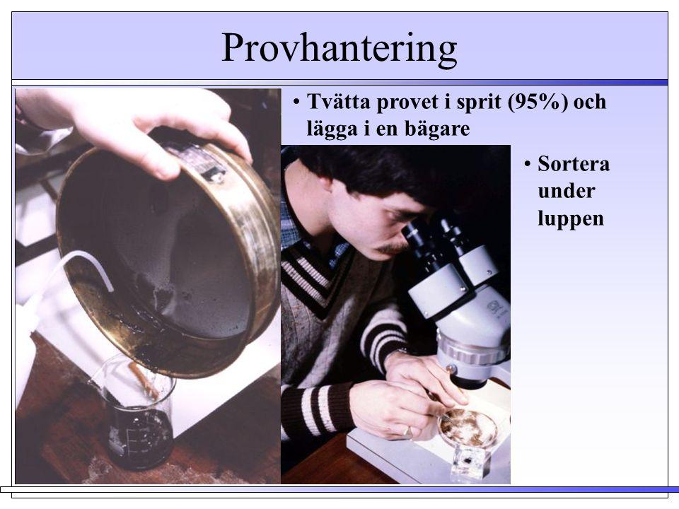 Provhantering Tvätta provet i sprit (95%) och lägga i en bägare