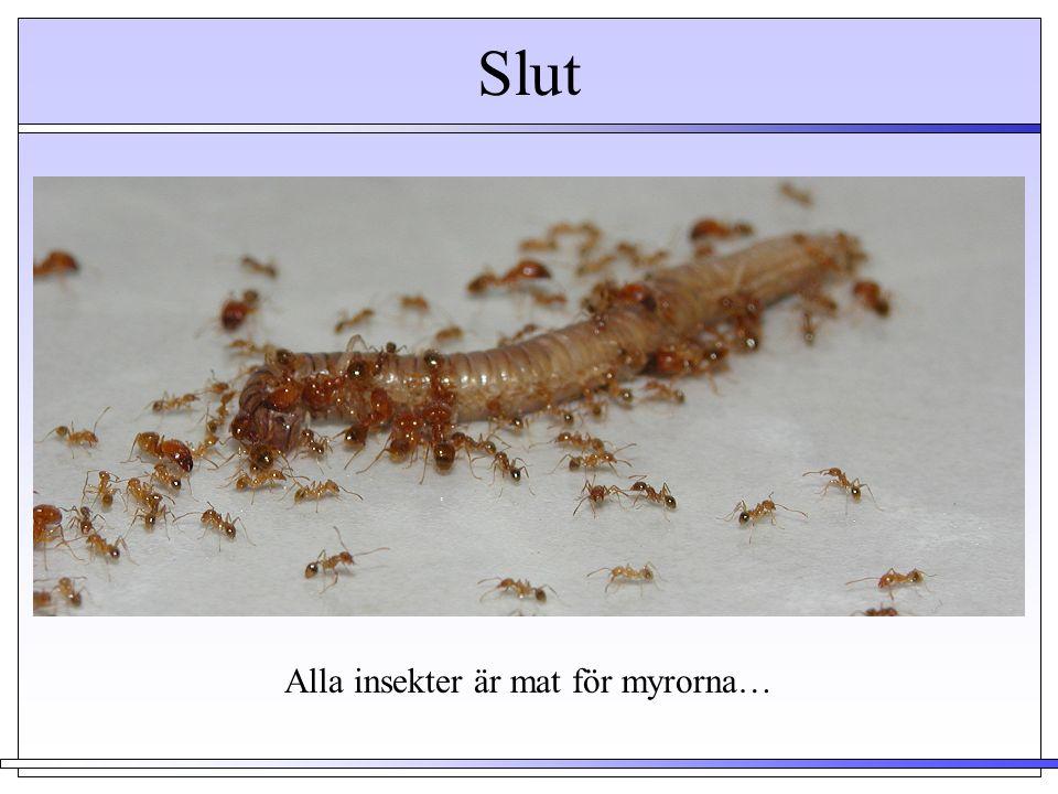 Alla insekter är mat för myrorna…