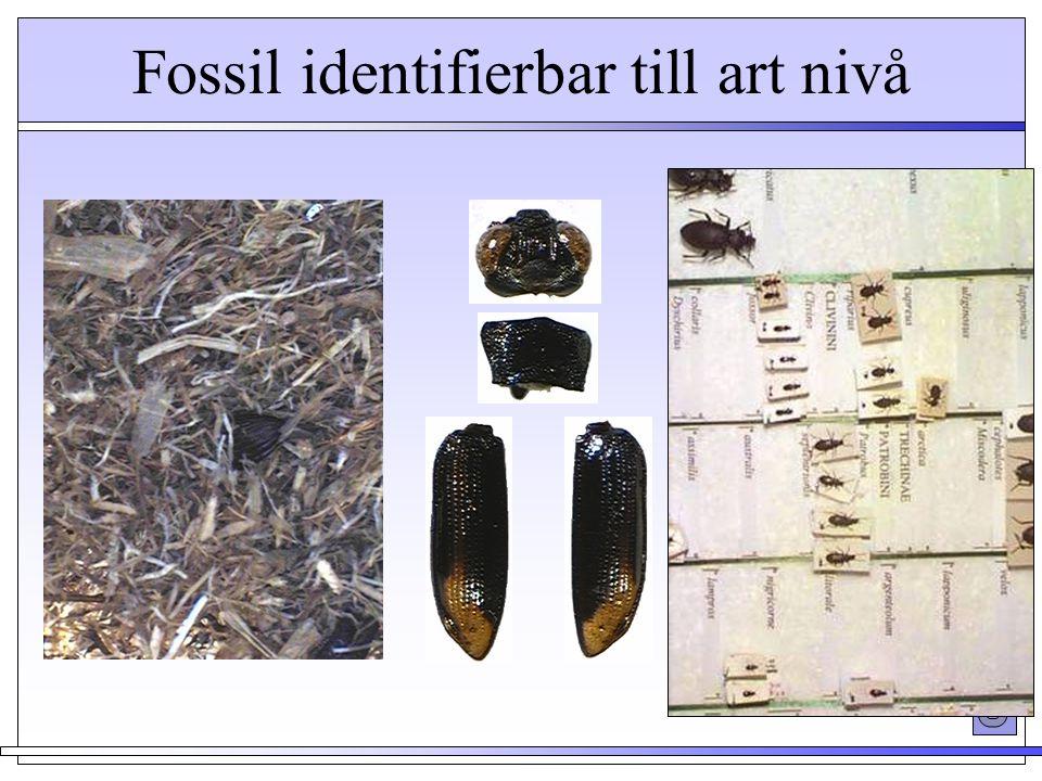 Fossil identifierbar till art nivå