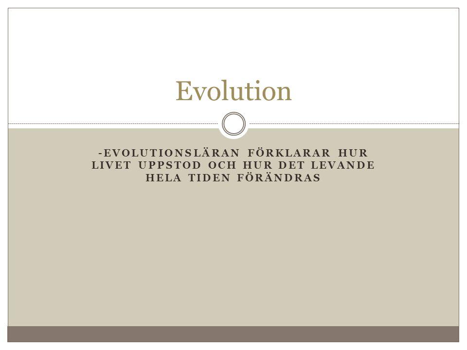 Evolution -evolutionsläran förklarar hur livet uppstod och hur det levande hela tiden förändras