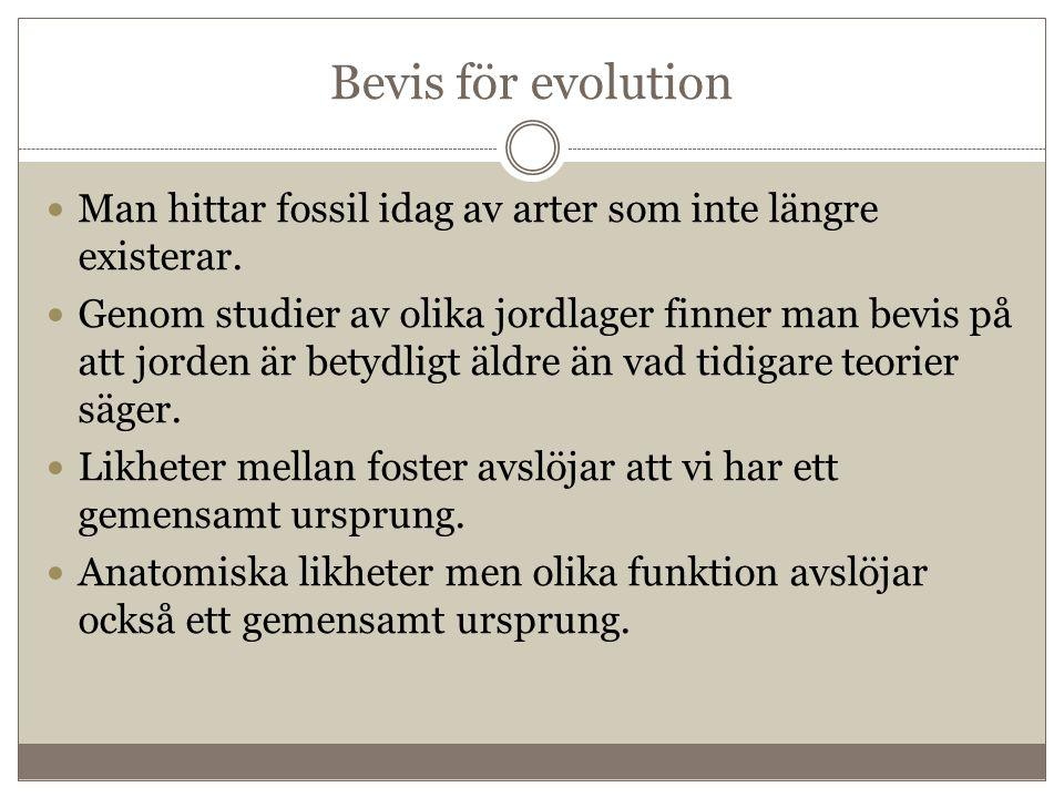 Bevis för evolution Man hittar fossil idag av arter som inte längre existerar.