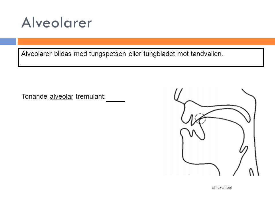 Alveolarer Alveolarer bildas med tungspetsen eller tungbladet mot tandvallen. Tonande alveolar tremulant:__.