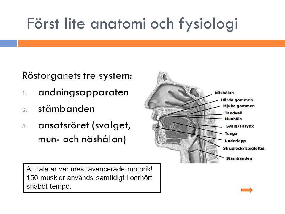 Först lite anatomi och fysiologi