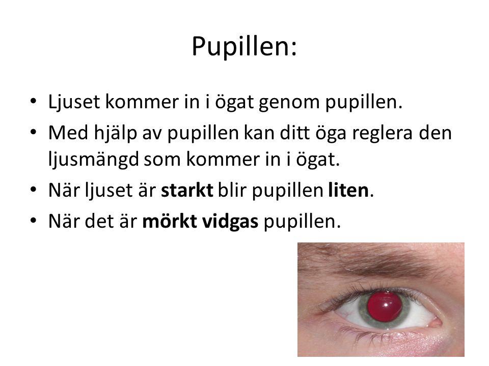Pupillen: Ljuset kommer in i ögat genom pupillen.