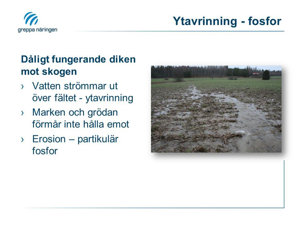 Ytavrinning - fosfor Dåligt fungerande diken mot skogen