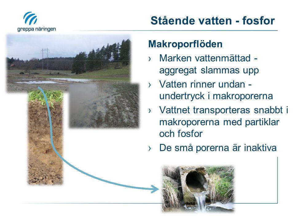 Stående vatten - fosfor