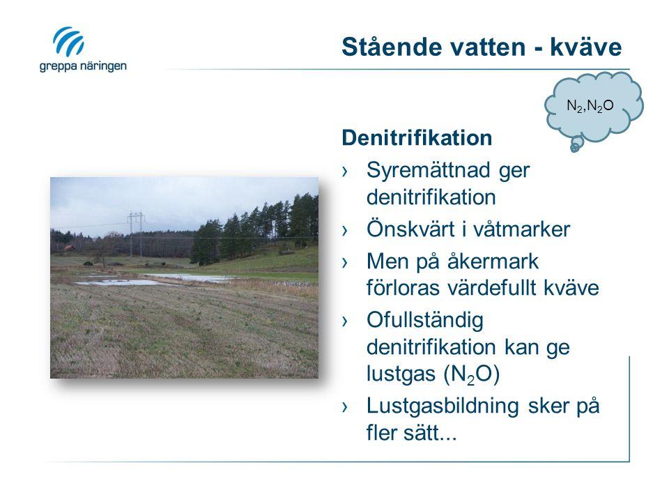 Stående vatten - kväve Denitrifikation Syremättnad ger denitrifikation