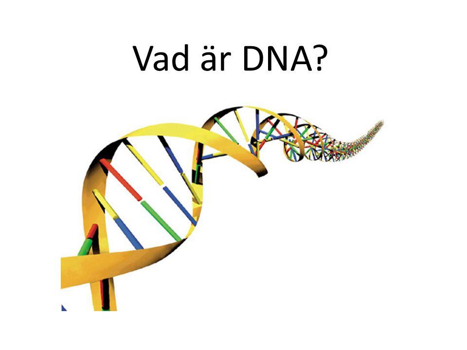Vad är DNA