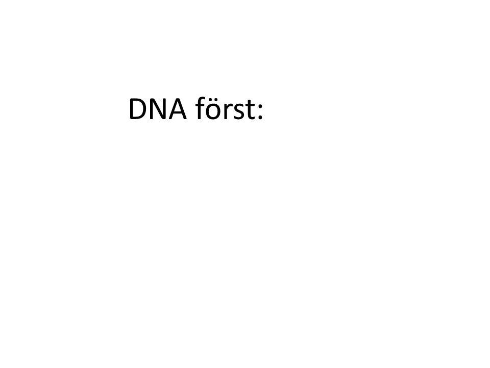 DNA först: