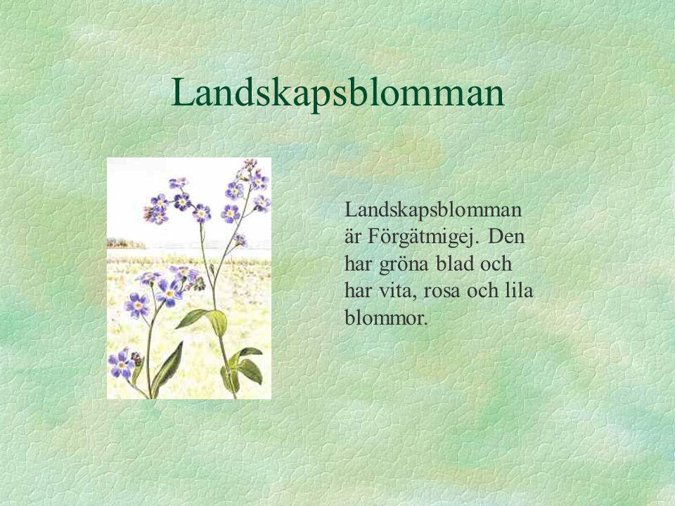 Landskapsblomman Landskapsblomman är Förgätmigej.