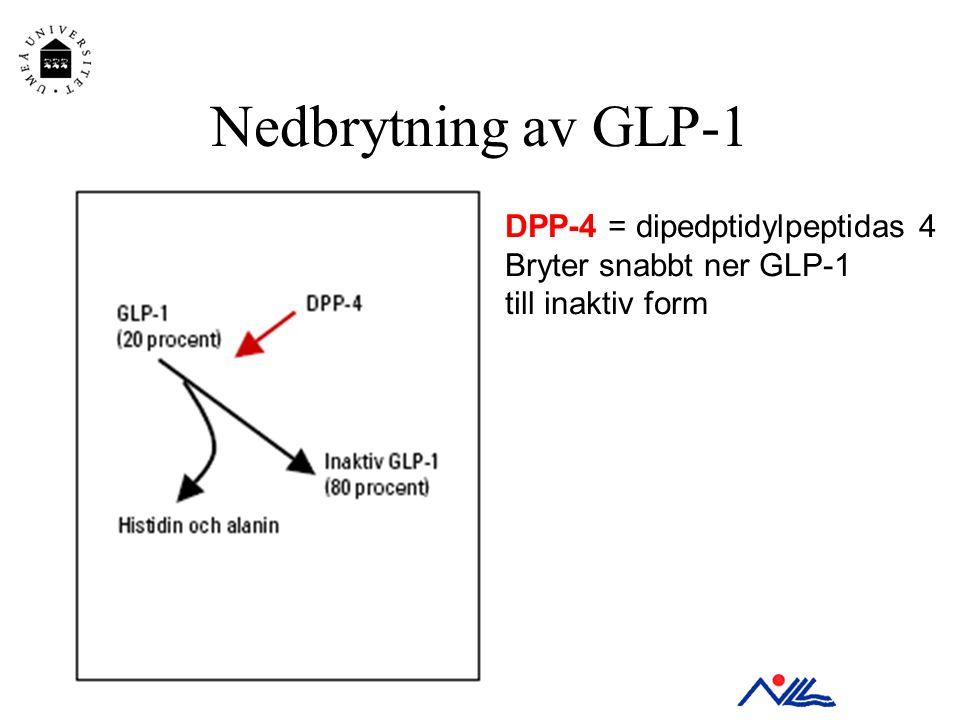 Nedbrytning av GLP-1 DPP-4 = dipedptidylpeptidas 4