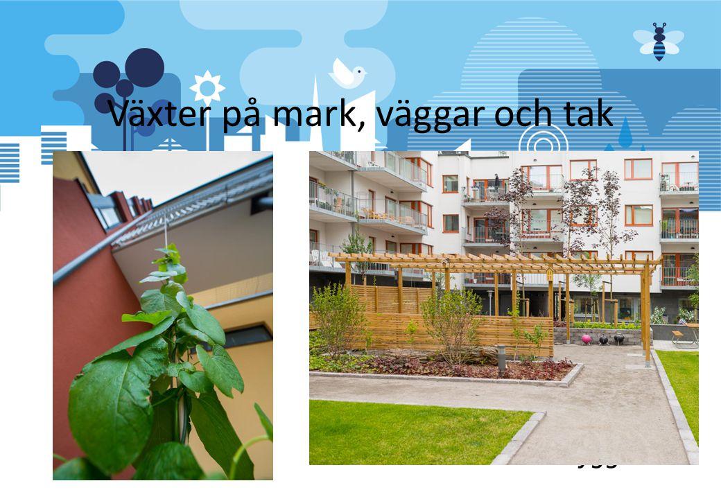 Växter på mark, väggar och tak