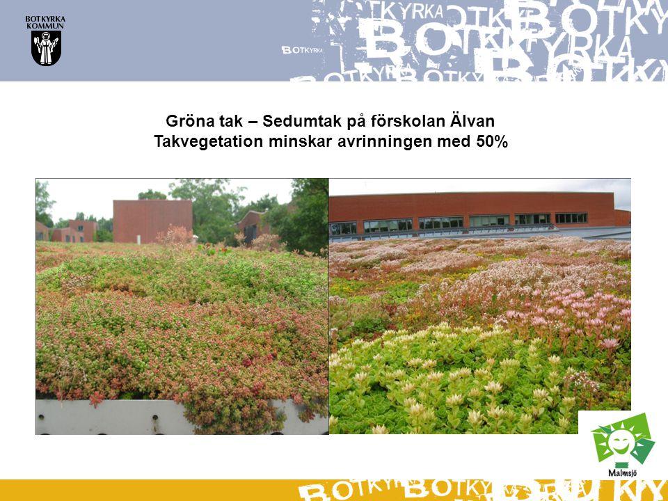 Gröna tak – Sedumtak på förskolan Älvan