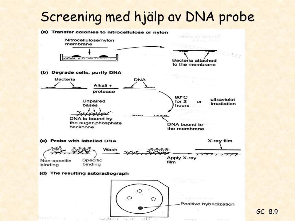 Screening med hjälp av DNA probe