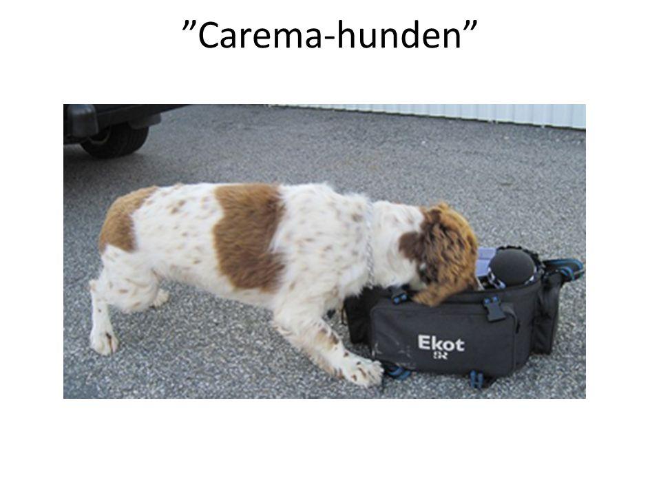 Carema-hunden Nosa upp tillfällen när värderingar kan göra politisk skillnad, typ blöjvägning! Agera snabbt, var ute där det händer något lokalt.