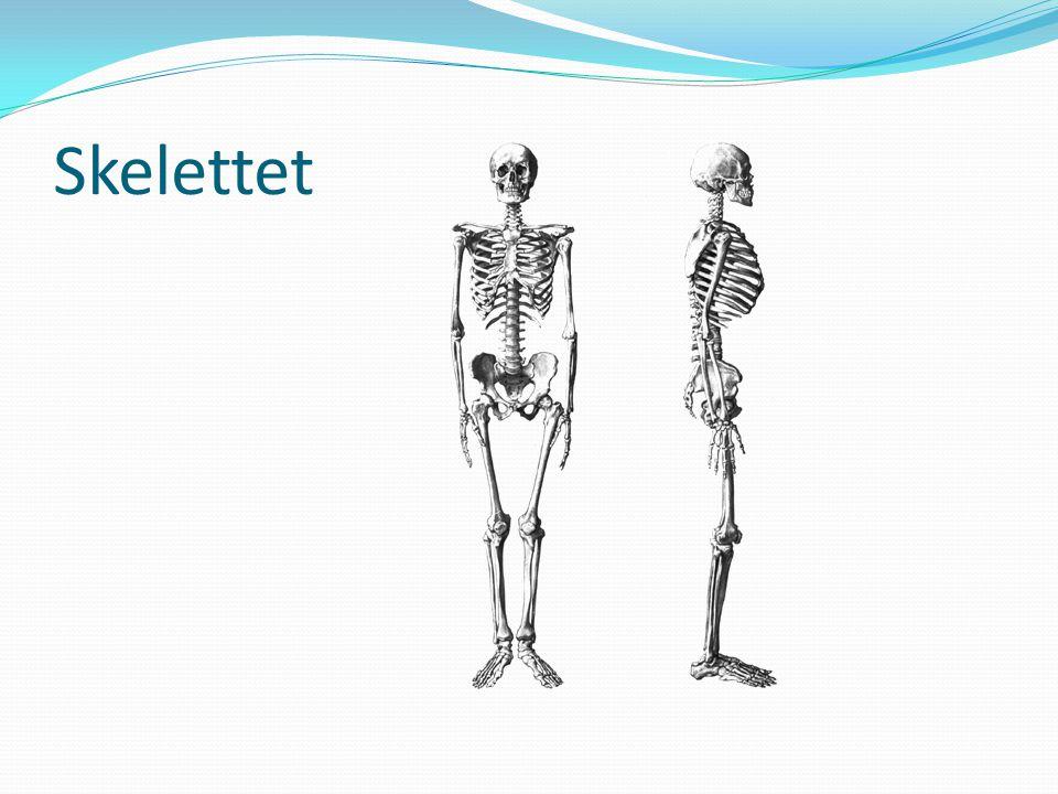 Skelettet Skriv lappar som ni ska placera ut på gubben – tävling