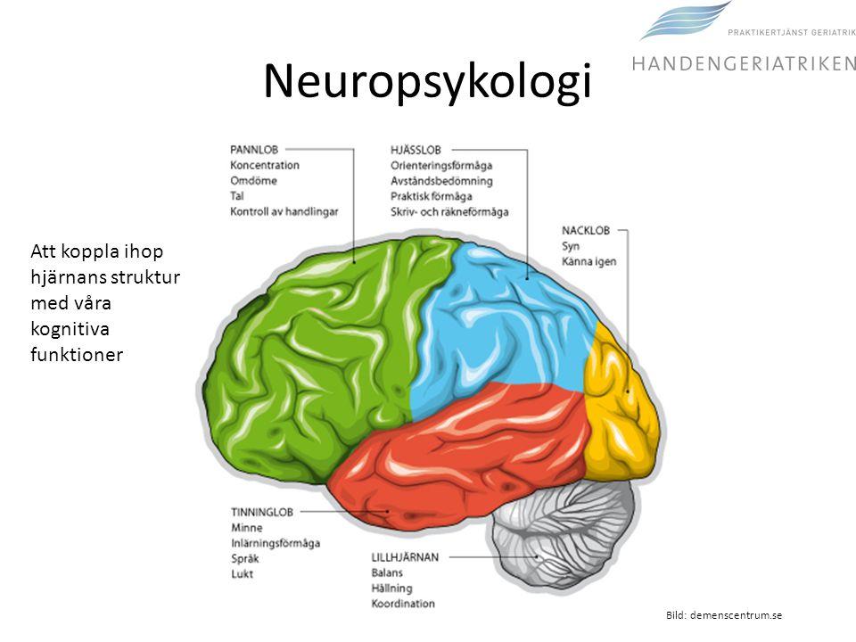 Neuropsykologi Att koppla ihop hjärnans struktur med våra kognitiva funktioner.