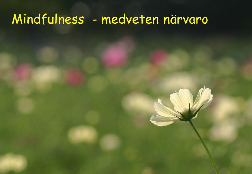 Mindfulness - medveten närvaro