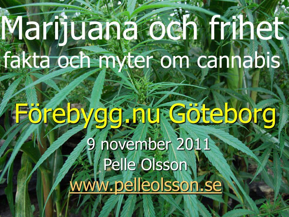 Marijuana och frihet fakta och myter om cannabis