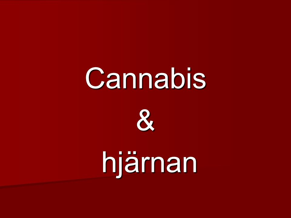 Cannabis & hjärnan