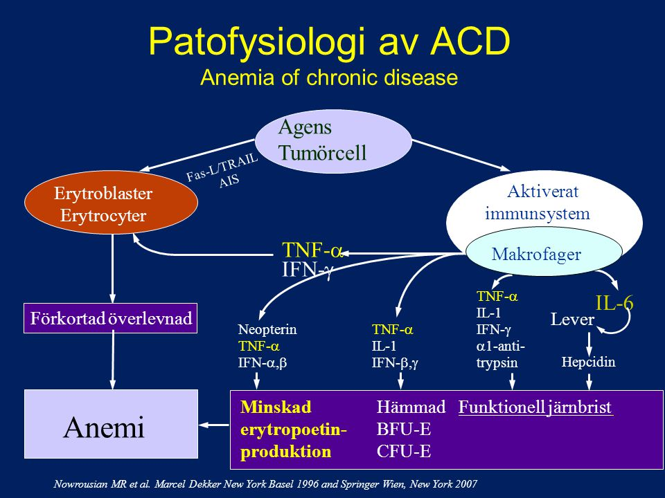 Patofysiologi av ACD Anemia of chronic disease