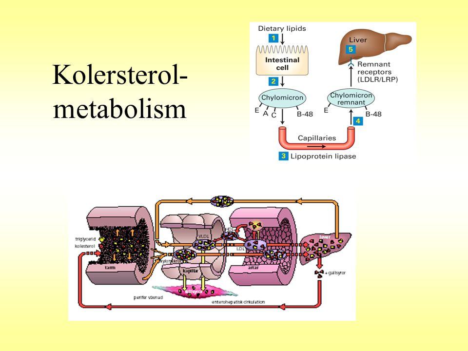 Kolersterol-metabolism