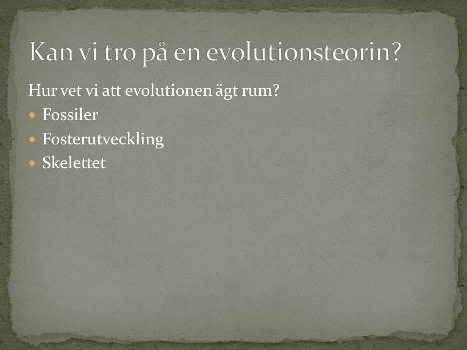Kan vi tro på en evolutionsteorin