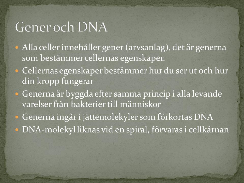 Gener och DNA Alla celler innehåller gener (arvsanlag), det är generna som bestämmer cellernas egenskaper.