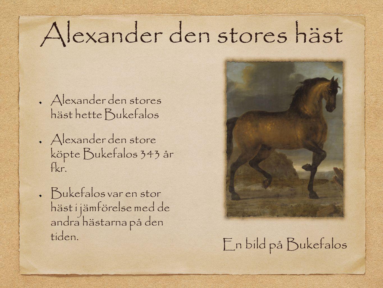 Alexander den stores häst