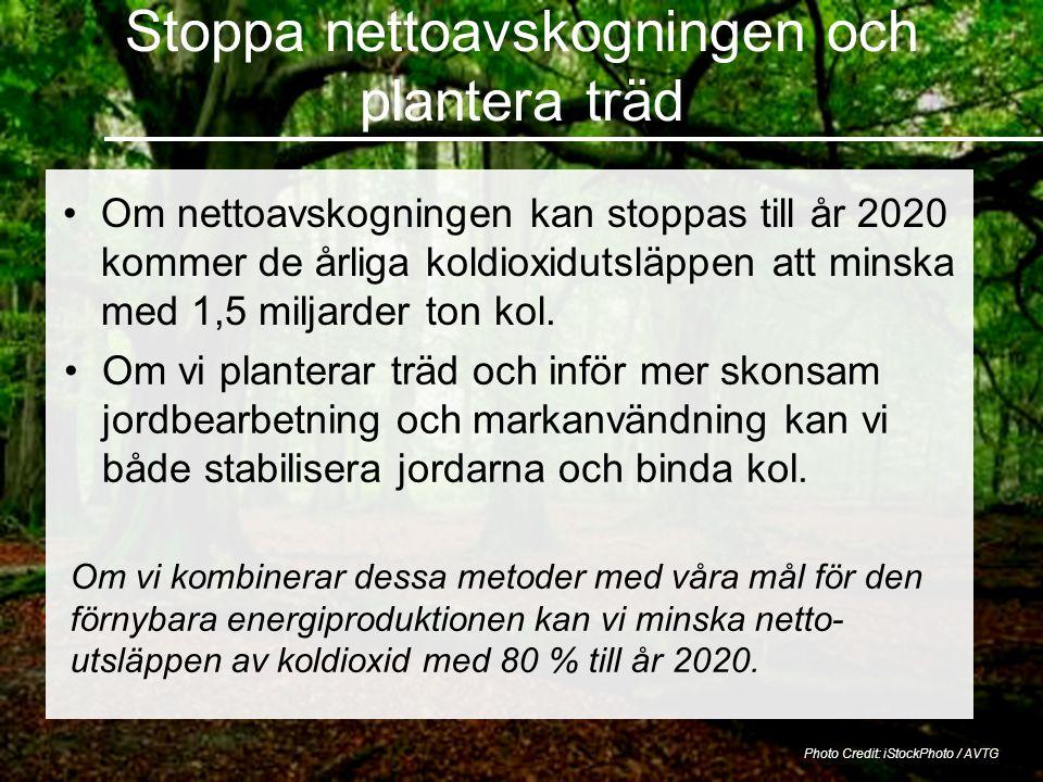 Stoppa nettoavskogningen och plantera träd