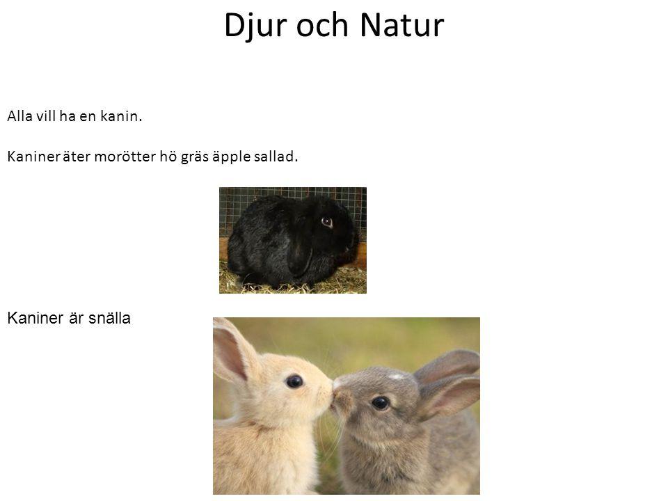 Djur och Natur Alla vill ha en kanin.
