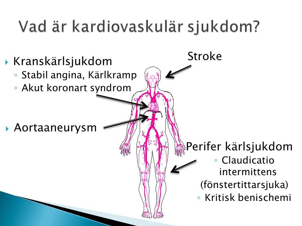 Vad är kardiovaskulär sjukdom