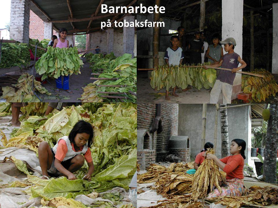 Barnarbete på tobaksfarm Barnarbete - på tobaksfarm