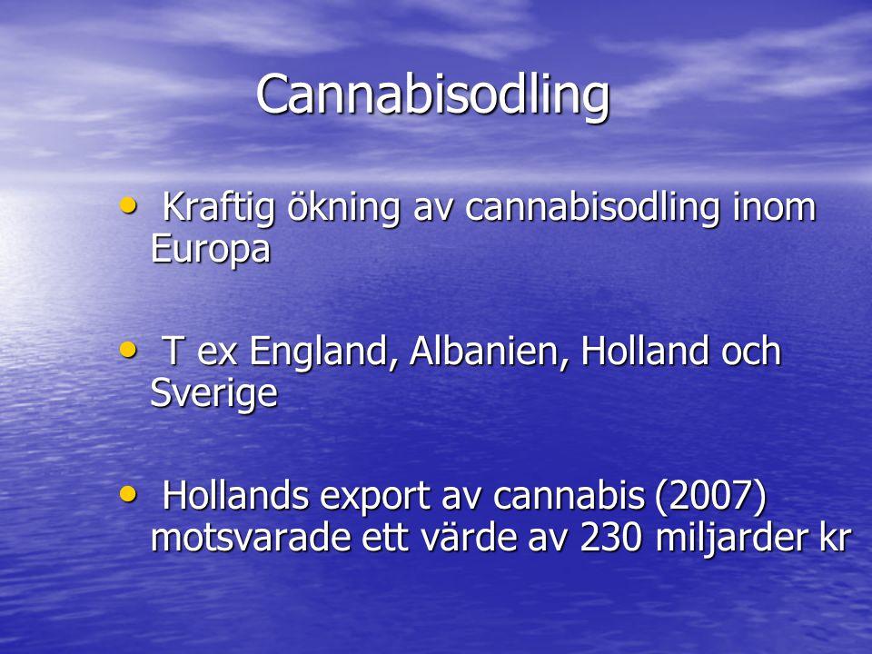 Cannabisodling Kraftig ökning av cannabisodling inom Europa