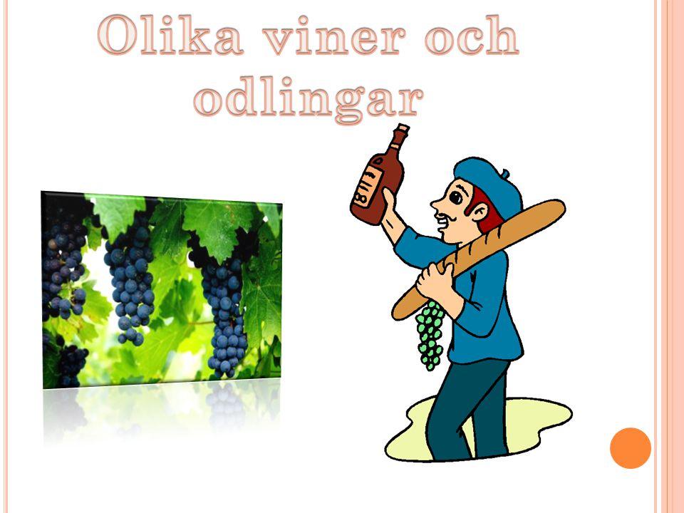 Olika viner och odlingar
