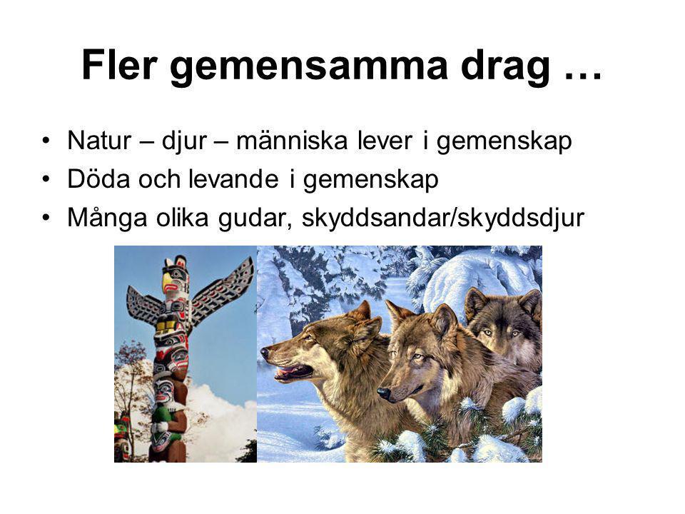 Fler gemensamma drag … Natur – djur – människa lever i gemenskap