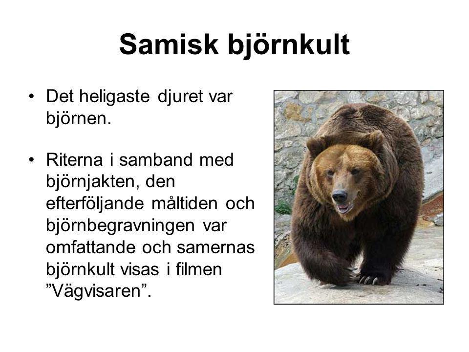Samisk björnkult Det heligaste djuret var björnen.