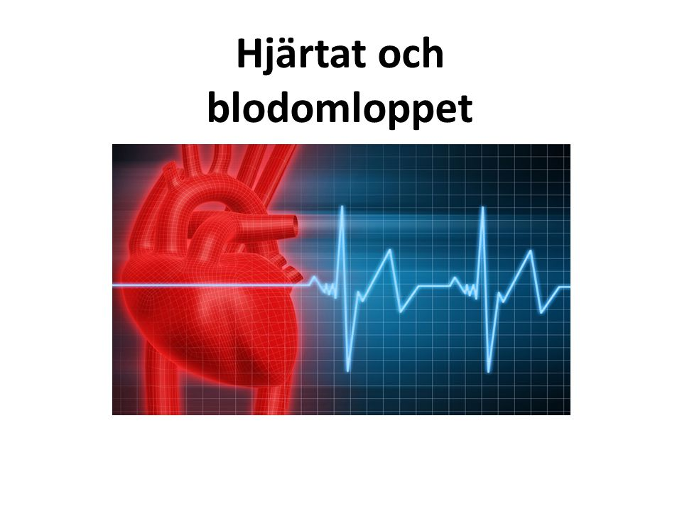 Hjärtat & Blodomloppet