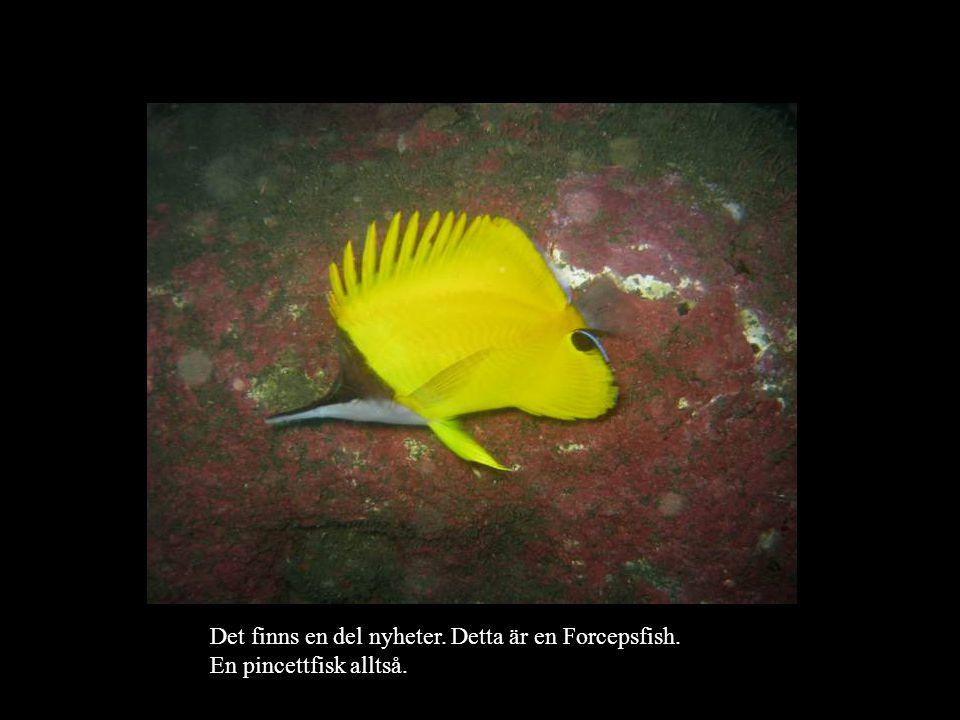 Det finns en del nyheter. Detta är en Forcepsfish
