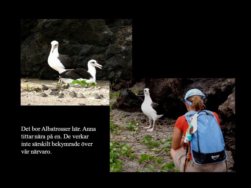 Det bor Albatrosser här. Anna tittar nära på en