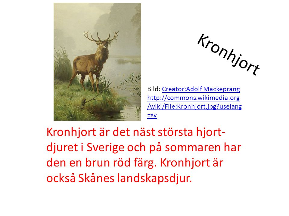 Kronhjort Bild: Creator:Adolf Mackeprang. http://commons.wikimedia.org/wiki/File:Kronhjort.jpg uselang=sv.