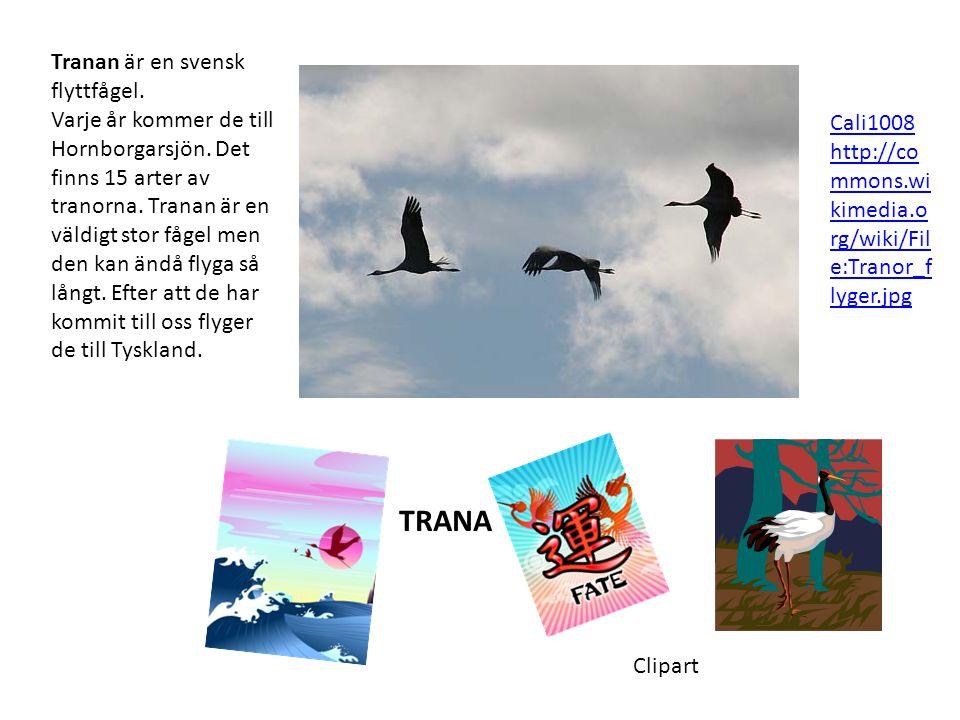 TRANA Tranan är en svensk flyttfågel.