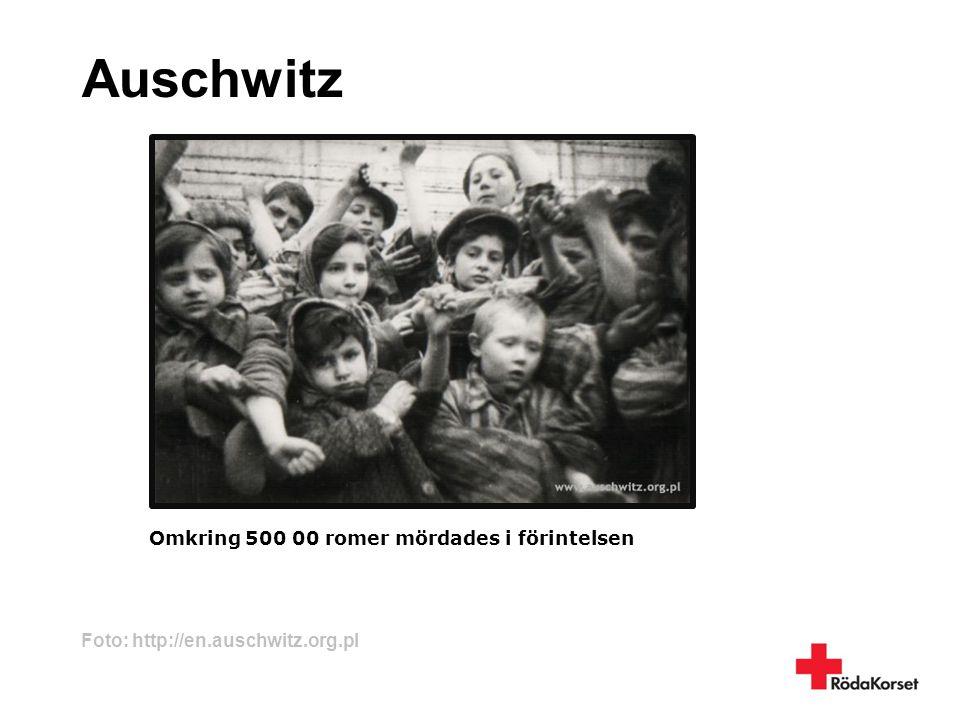 Auschwitz Omkring 500 00 romer mördades i förintelsen