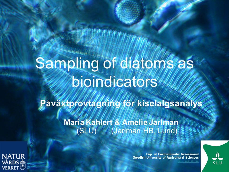Sampling of diatoms as bioindicators