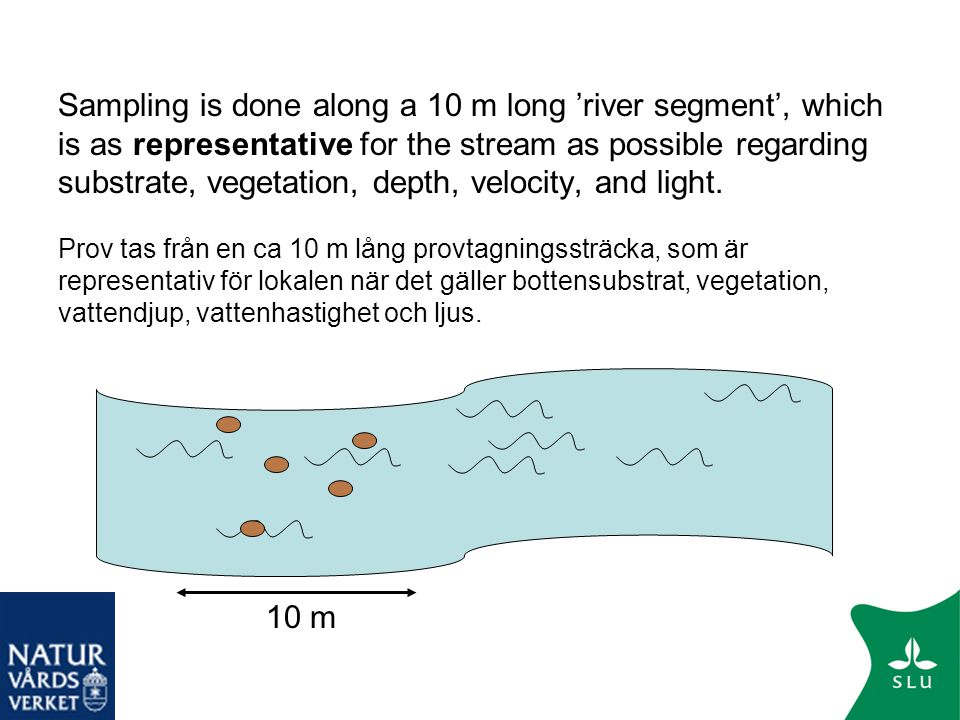 Sampling is done along a 10 m long 'river segment', which