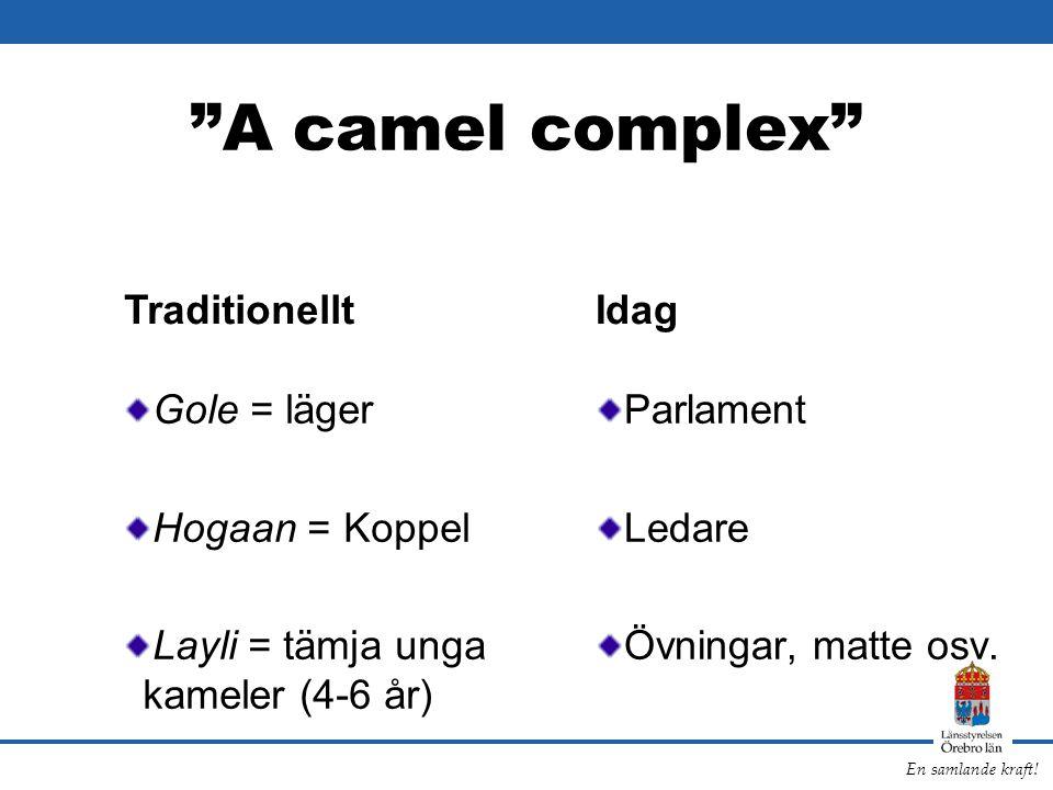 A camel complex Traditionellt Idag Gole = läger Hogaan = Koppel