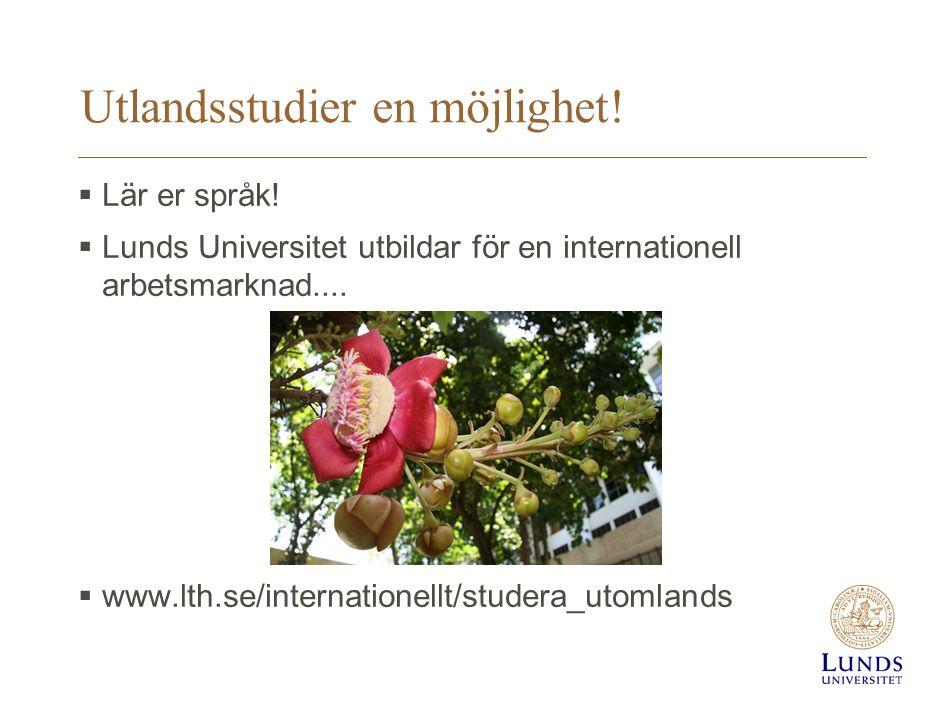 Utlandsstudier en möjlighet!